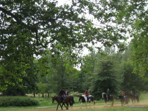 Horses in Hyde Park, London